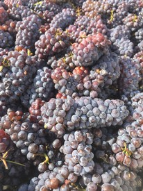Pinot Gris Single Vineyard 2018